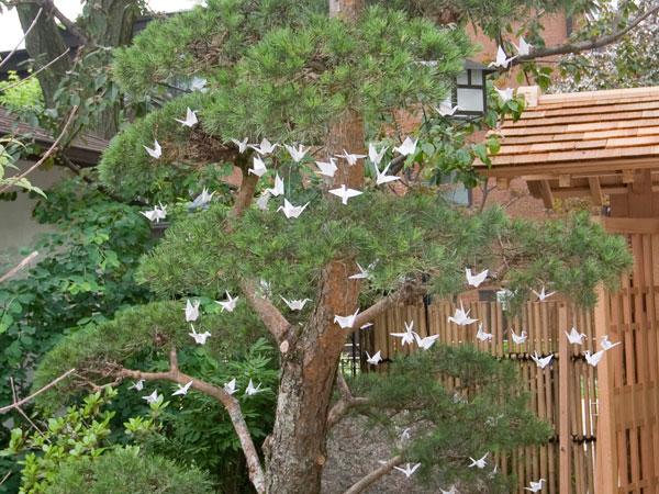 Pine in West Garden