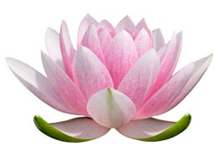 MB-Lotus